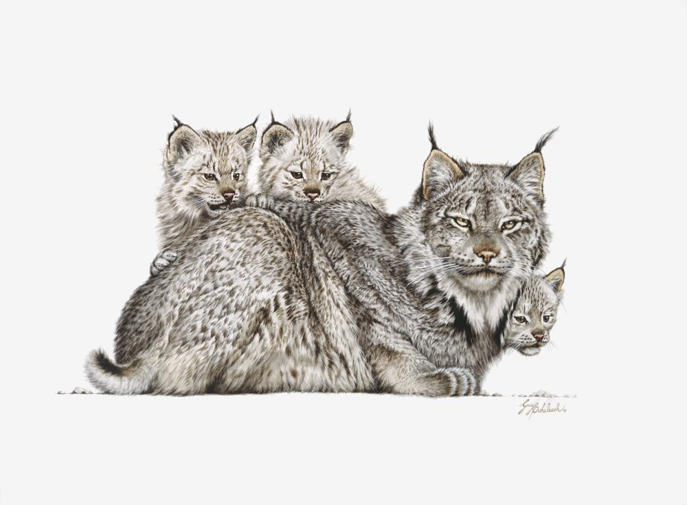 """Lynx Mother & Kittens""  -  16"" x 22"" ""Lynx Mother & Kittens"" - American Cats  American wild cats  Wild Felines of America"