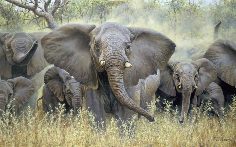 """Mary's Matriarch""  -  30"" x 50"" ""Mary's Matriarch"" - Elephants  Elephant Paintings  Elephant Art"