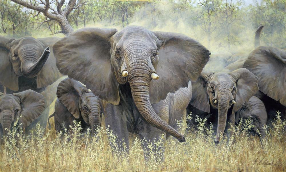 """""""Mary's Matriarch""""  -  30"""" x 50"""" """"Mary's Matriarch"""" - Elephants  Elephant Paintings  Elephant Art"""