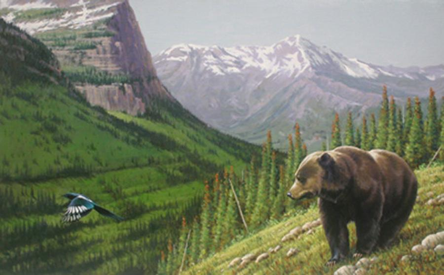 """Montana Grizzly""  -  26"" x 42"" ""Montana Grizzly"" - American Game  American Big Game  American Prey Animals"