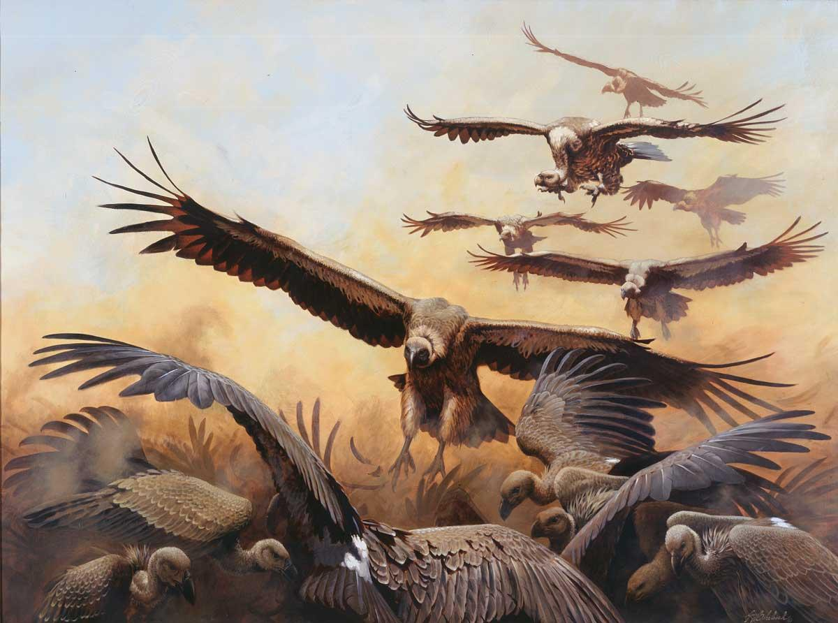 """More Lawyers""  -  36"" x 48"" - Oil On Linen ""More Lawyers""  Birds of Prey  Raptors"