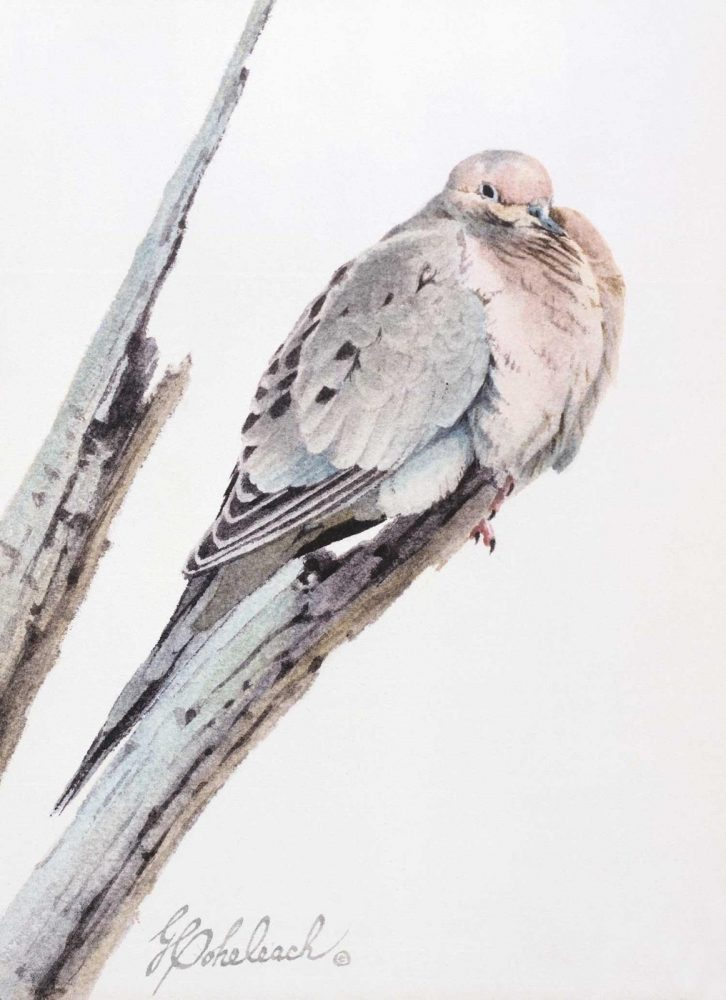 """Mourning Dove""  - 12"" x 9"" ""Mourning Dove"" - Birds  Song Birds  Game Birds"
