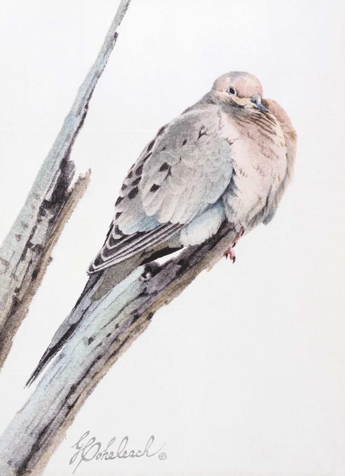 """Mourning Dove""  - 12"" x 9"" ""Mourning Dove"" - Birds  Song Birds  Game Birds"