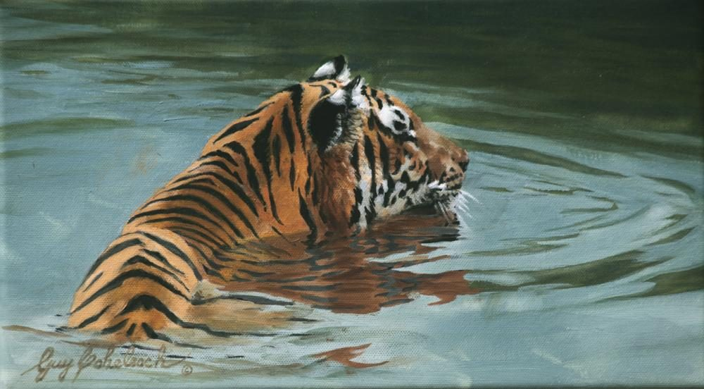 """Much Cooler"" Sketch  -  8"" x 24"" ""Much Cooler"" - Tigers  Bengal Tiger  Siberian Tiger"