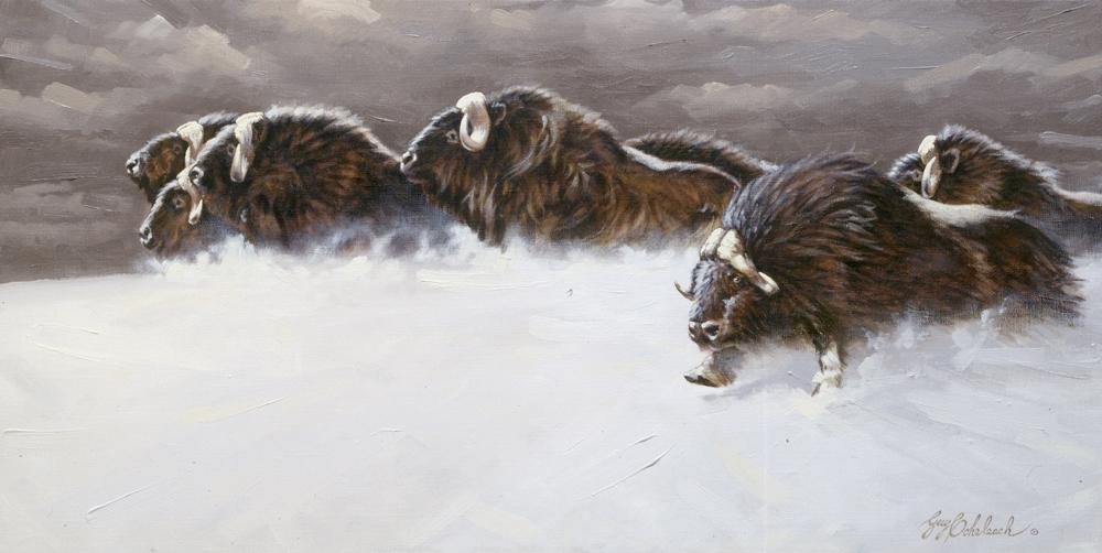 """Musk Ox""  -  12"" x 24"" ""Musk Ox"" - American Game  American Big Game  American Prey Animals"