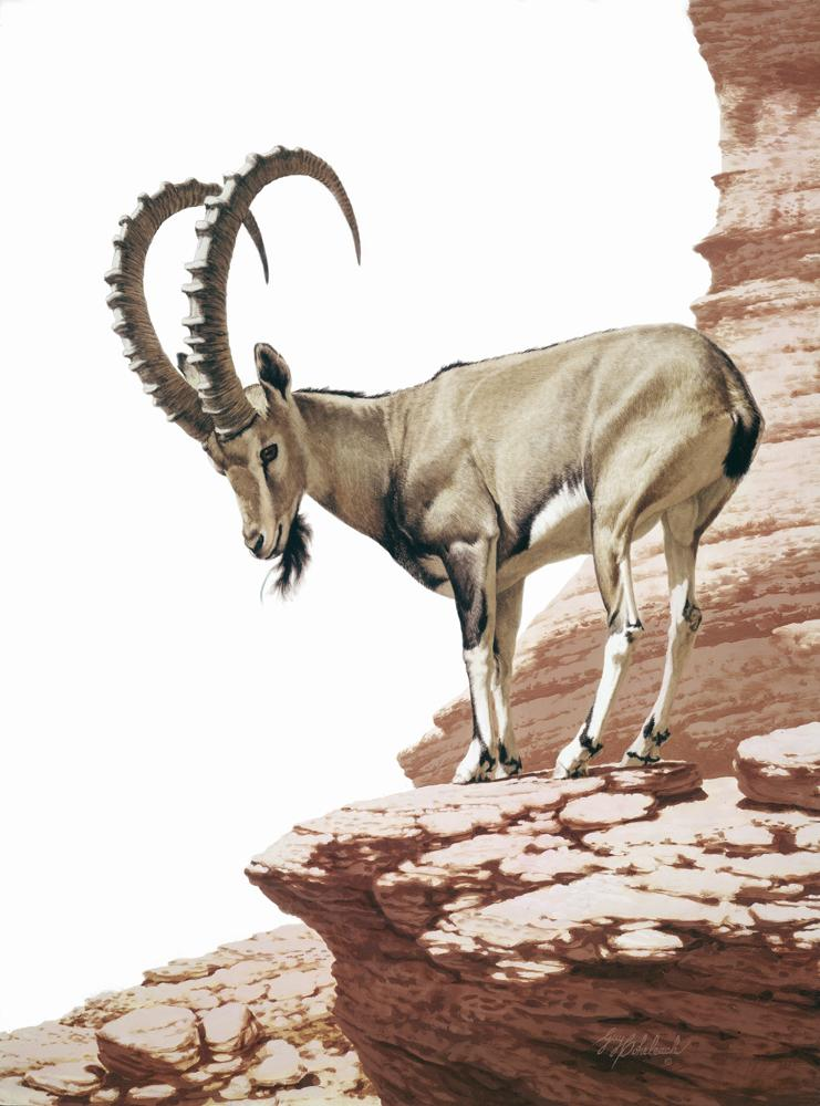 """Nubian Ibex"" <br> 40 X 30 ""Nubian Ibex"" - African Game  African Game Paintings  Plains Game Art"