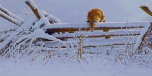 """On The Fence""  - 12"" x 24"" ""On The Fence"" - Canine  Wild Canine Paintings  Wolf and Fox Artwork"