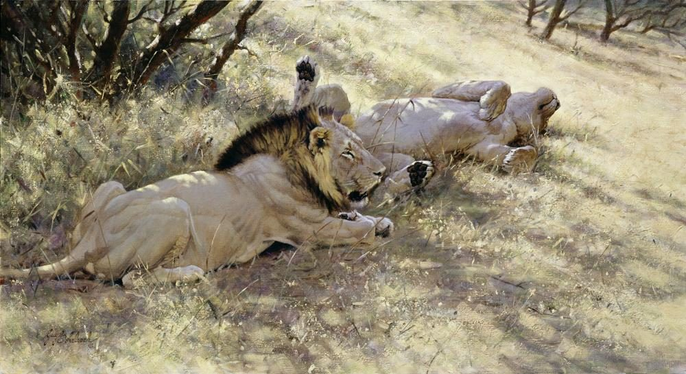 """Pause""  -  24"" x 44"" ""Pause"" - Lions  Lion Art  Lion Paintings"