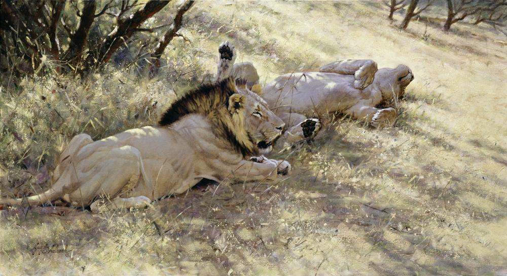 """""""Pause""""  -  24"""" x 44"""" """"Pause"""" - Lions  Lion Art  Lion Paintings"""