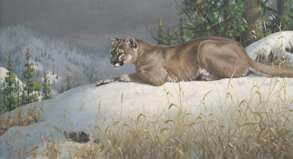"""Puma View""   -  24"" x 44"" ""Puma View"" - American Cats  American wild cats  Wild Felines of America"