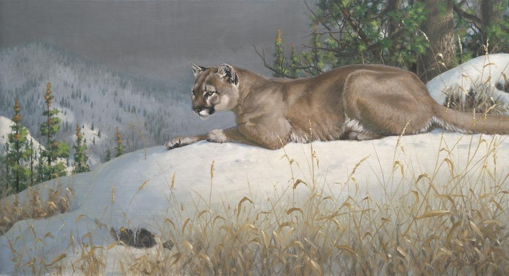 """Puma View""   -  24"" x 44"" ""Puma View"" - American Cats  American wild cats  Wild Felines of America"