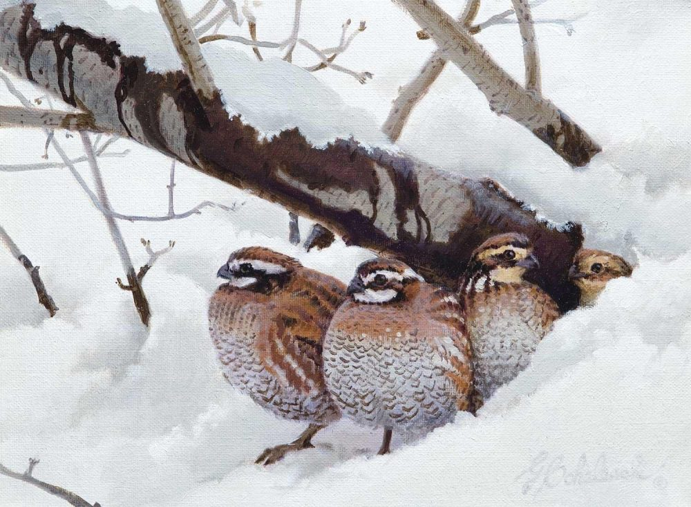 """Quail Shelter""  -   9"" x 12"" ""Quail Shelter"" - Birds  Song Birds  Game Birds"