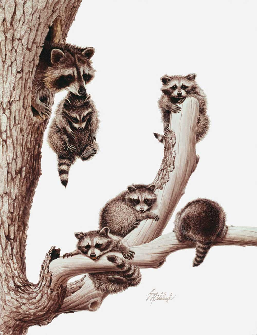 """Raccoons""  -  26"" x 20"" ""Raccoons"" - Critters  Small Game Paintings  Small Animals in Art"