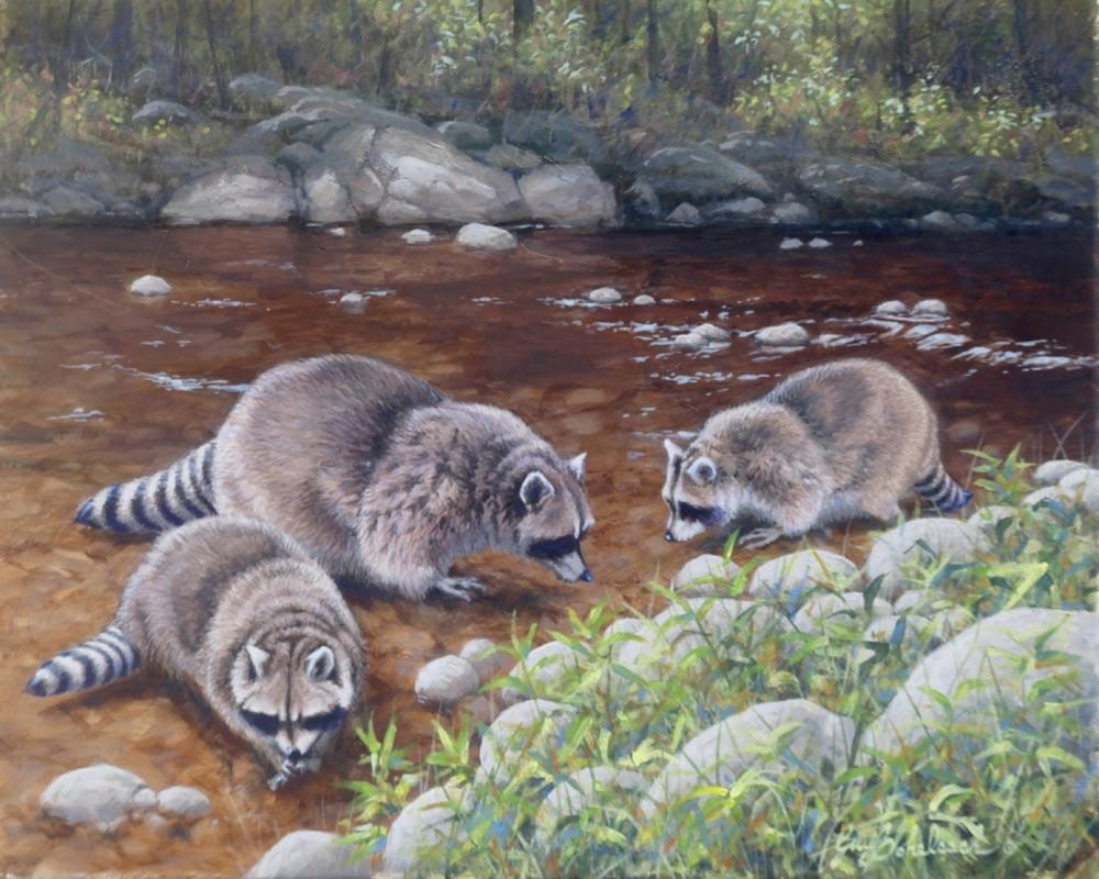 """Raccoons Three""  -  16"" x 20"" ""Raccoons Three"" - Critters  Small Game Paintings  Small Animals in Art"