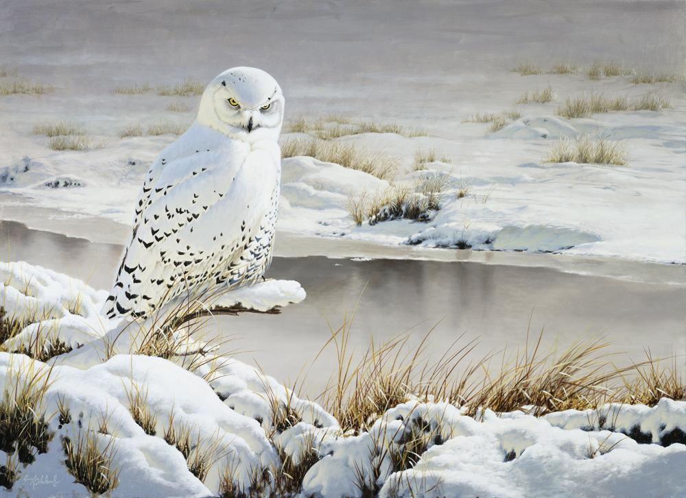 """Rare Visit"" Snow  -  30"" x 40"" ""Rare Visit""  - Owls  Owl Paintings  Owl Artwork"