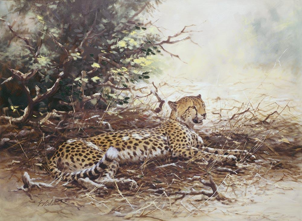 """Reclining Cheetah""   -  30"" x 40"" ""Reclining Cheetah"" - Cheetahs  Cheetah  cheeta"