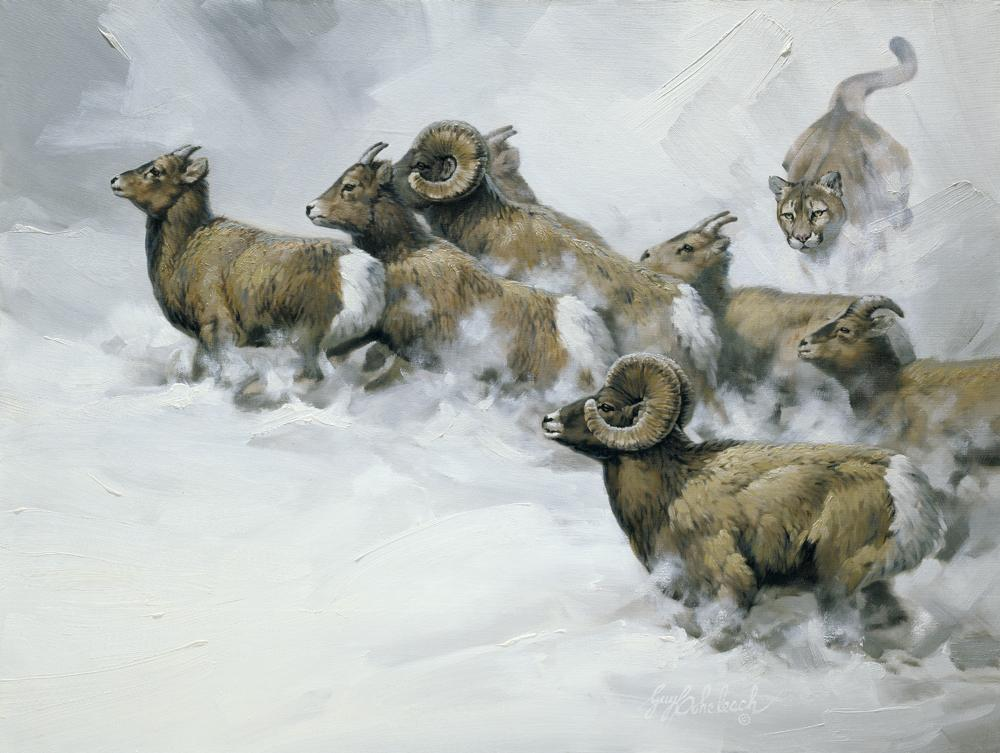 """Rocky Mountain Chase""  - 30"" x 40"" ""Rocky Mountain Chase"" - American Cats  American wild cats  Wild Felines of America"
