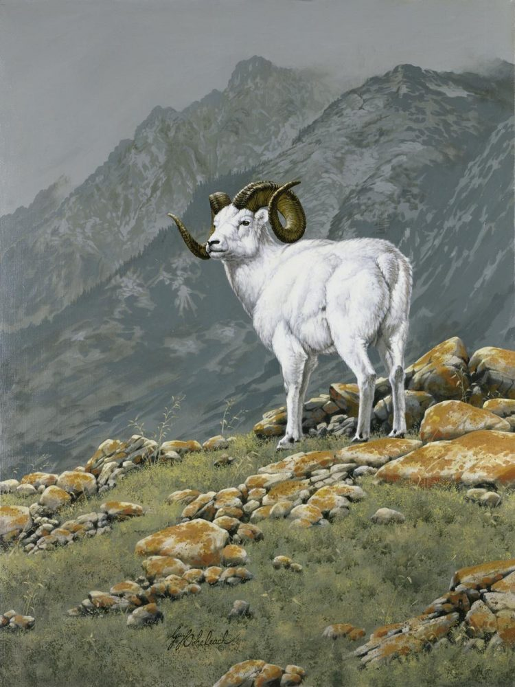 """SIngle Dall Sheep""  -  40"" x 30"" ""SIngle Dall Sheep"" - American Game  American Big Game  American Prey Animals"