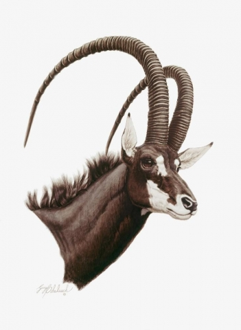 """Sable Antelope""<BR>30 X 22 ""Sable Antelope"" - African Game  African Game Paintings  Plains Game Art"
