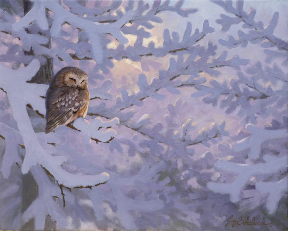 """""""Saw Whet Owl Roost""""  -  16"""" x 20"""" """"Saw Whet Owl Roost"""" - Owls  Owl Paintings  Owl Artwork"""