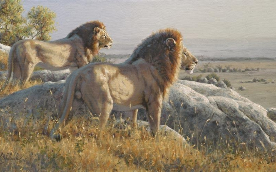 """Serengetti Bachlors""  -  15"" x 30"" ""Serengetti Bachlors"" - Lions  Lion Art  Lion Paintings"
