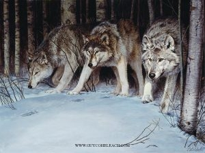 """Serious Business""  -  30"" x 40"" ""Serious Business"" - Canine  Wild Canine Paintings  Wolf and Fox Artwork"