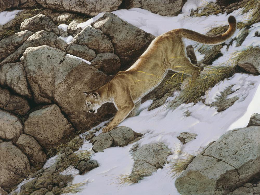 """""""Shady Stalk, Puma""""  -  30"""" x 40"""" """"Shady Stalk, Puma"""" - American Cats  American wild cats  Wild Felines of America"""