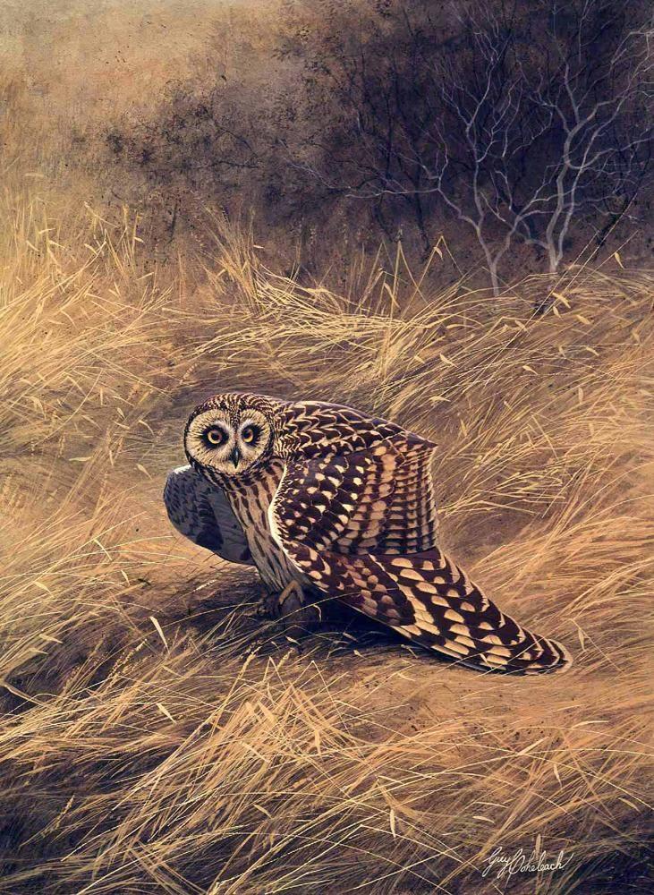 """Short Eared Owl""  -  32"" x 24"" ""Short Eared Owl"" - Owls  Owl Paintings  Owl Artwork"
