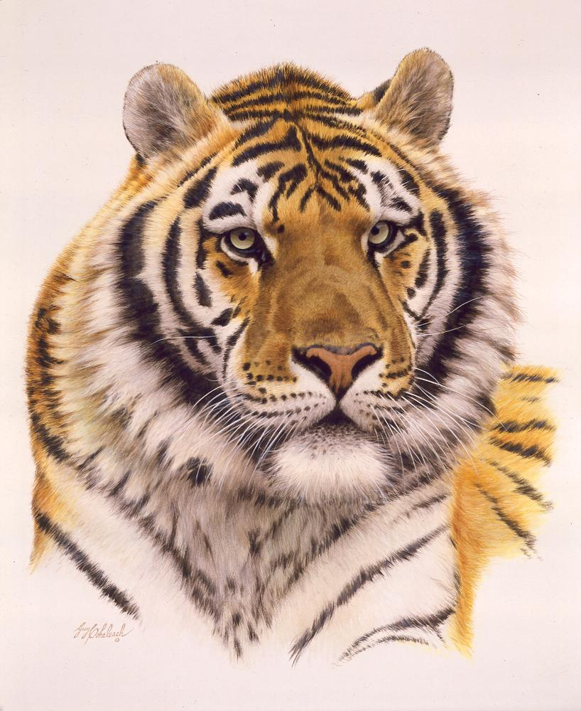 """Siberian Tiger""  -  20"" x 26"" ""Siberian Tiger"" - Portraits  Big Cat Heads  Cat Head Paintings"