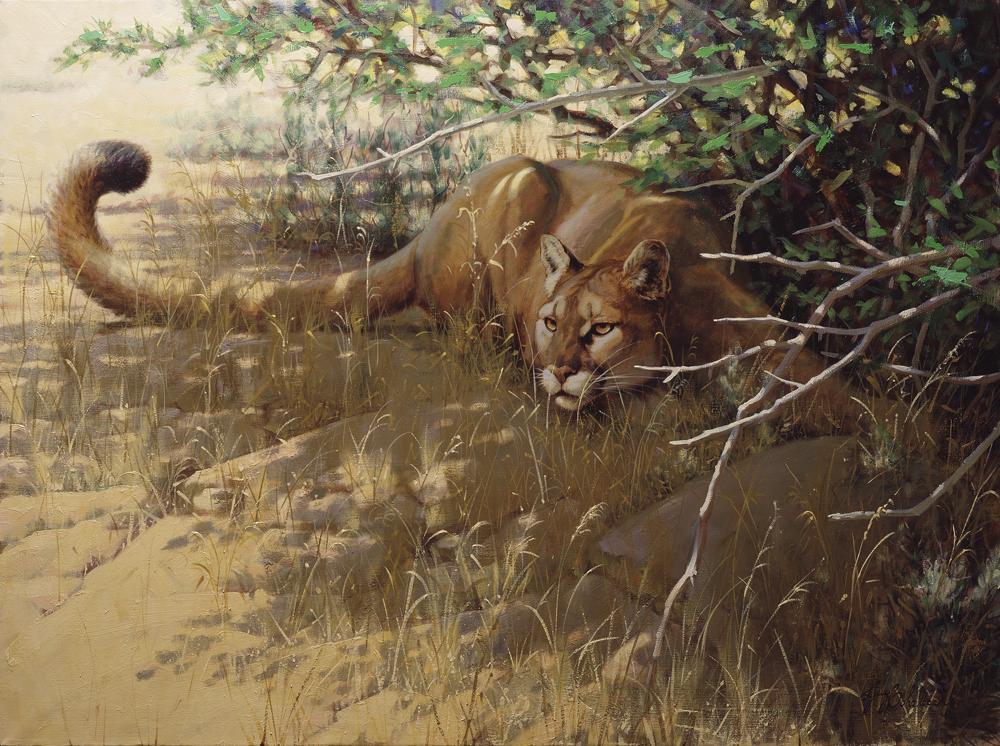 """""""Sierra Sunspots""""   -  30"""" x 40"""" Sierra Sunspots - American Cats  American wild cats  Wild Felines of America"""