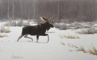"""Lone Moose "" -  12"" x 24"" ""Single Moose in Snow"" - American Game  American Big Game  American Prey Animals"