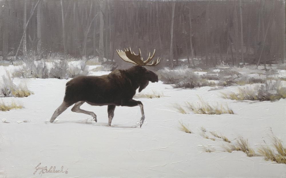 """Lone Moose "" -  12"" x 24"" ""Single Moose in Snow"" - American Game  American Big Game  American Prey Animals"