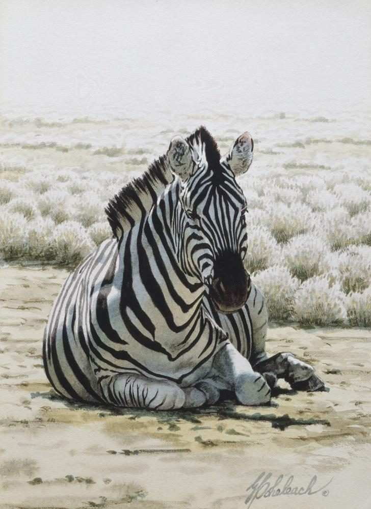 """Sitting Zebra Sketch""<BR>12 X 9 ""Sitting Zebra"" - African Game  African Game Paintings  Plains Game Art"
