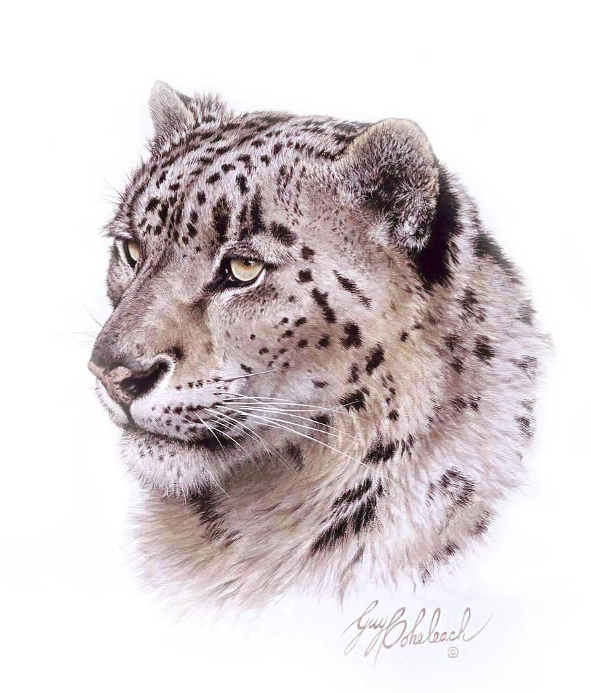 """Snow Leopard Head""  -  16""x20"" ""Snow Leopard Head"" - Portraits  Big Cat Heads  Cat Head Paintings"