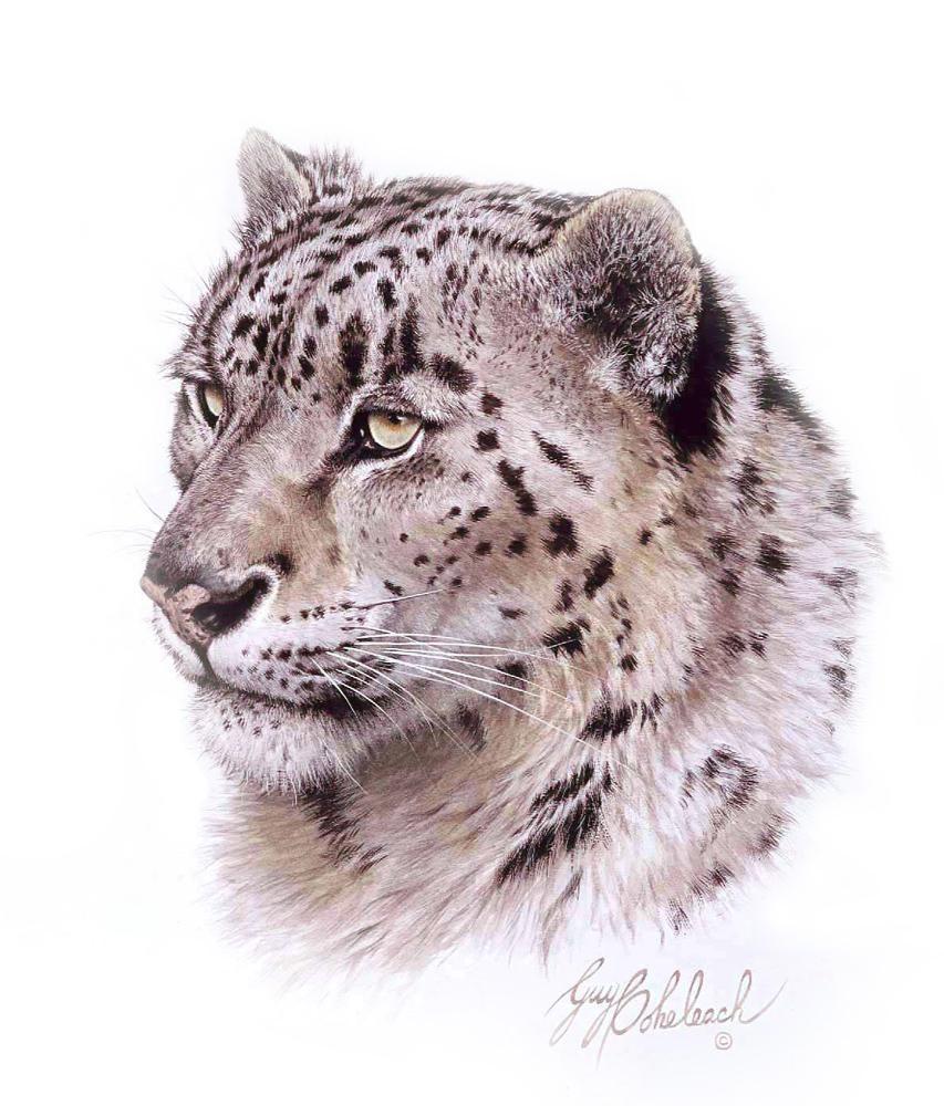 """""""Snow Leopard Head""""  -  16""""x20"""" """"Snow Leopard Head"""" - Portraits  Big Cat Heads  Cat Head Paintings"""