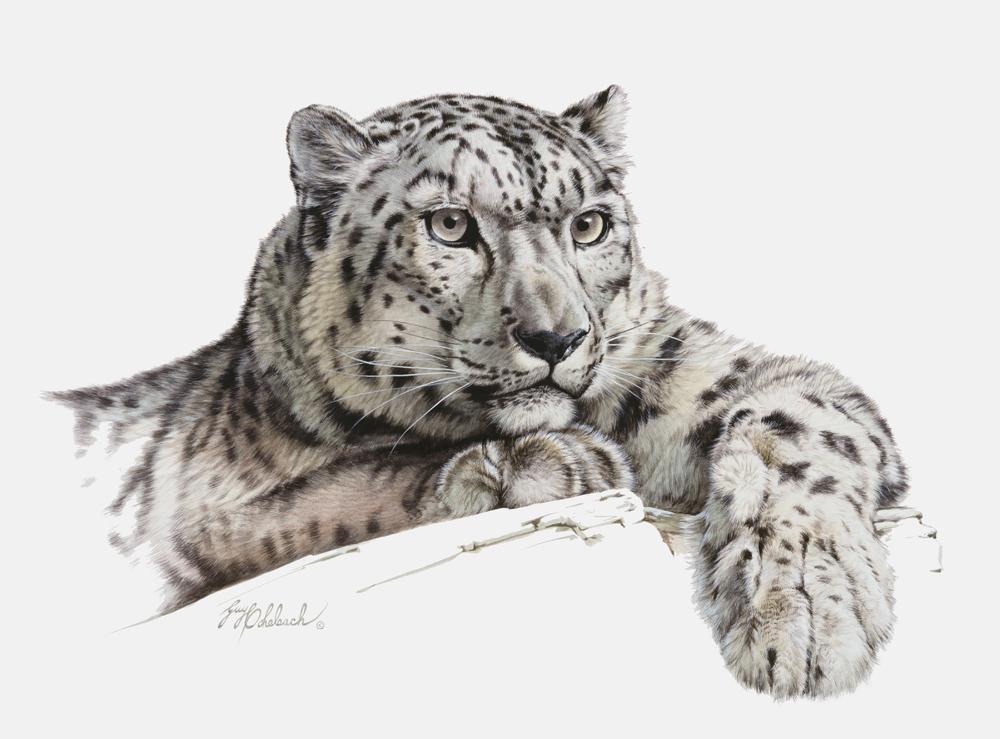 """Snow Paws, Ruth's Snow Leopard""  -  9"" x 12"" ""Snow Paws, Ruth's Snow Leopard"" - Leopards  Leoparp Paintings  Leopard Art"