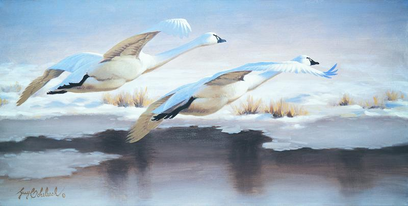 """""""Snow Swans""""  -  18"""" x 36"""" """"Snow Swans"""" - Water Birds  Waterfowl Paintings  Waterbird Paintings"""