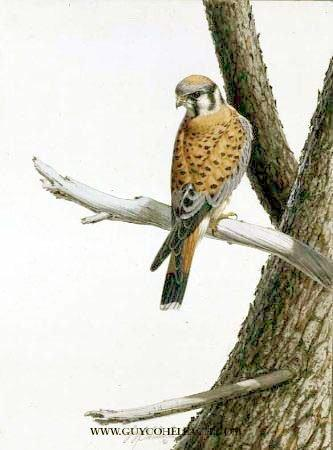 """Sparrow Hawk"" 16"" X 20"" Guache, Stolen 1967 Brooklyn, New York"