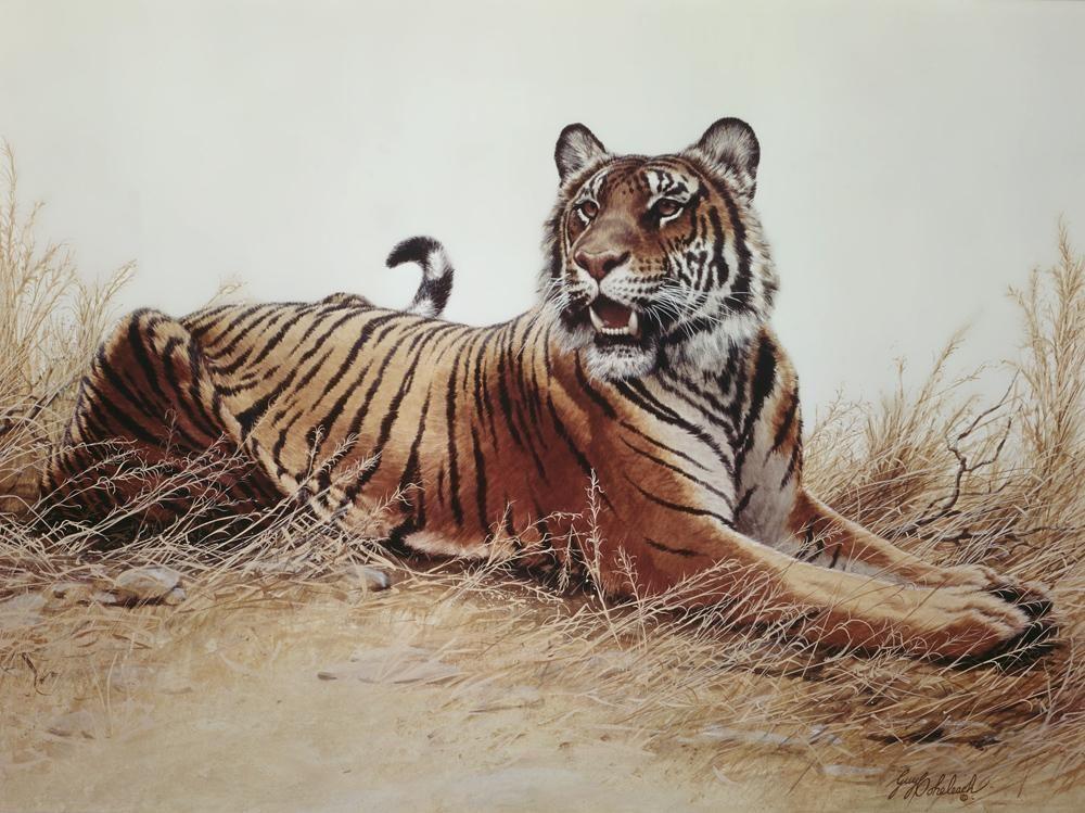 """Sugar""   -  30"" x 40"" ""Sugar"" - Tigers  Bengal Tiger  Siberian Tiger"