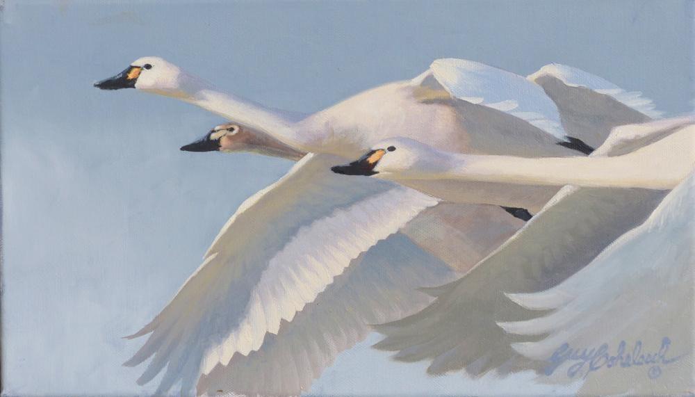 """""""Swan Trio"""" Sketch  -  8"""" x 14"""" """"Swan Trio"""" Sketch - Water Birds  Waterfowl Paintings  Waterbird Paintings"""