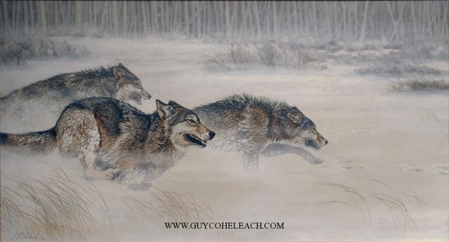 """Thirty Yds Closing Fast, Wolves""  -  24"" x 44"" ""Thirty Yds Closing Fast"" - Canine  Wild Canine Paintings  Wolf and Fox Artwork"