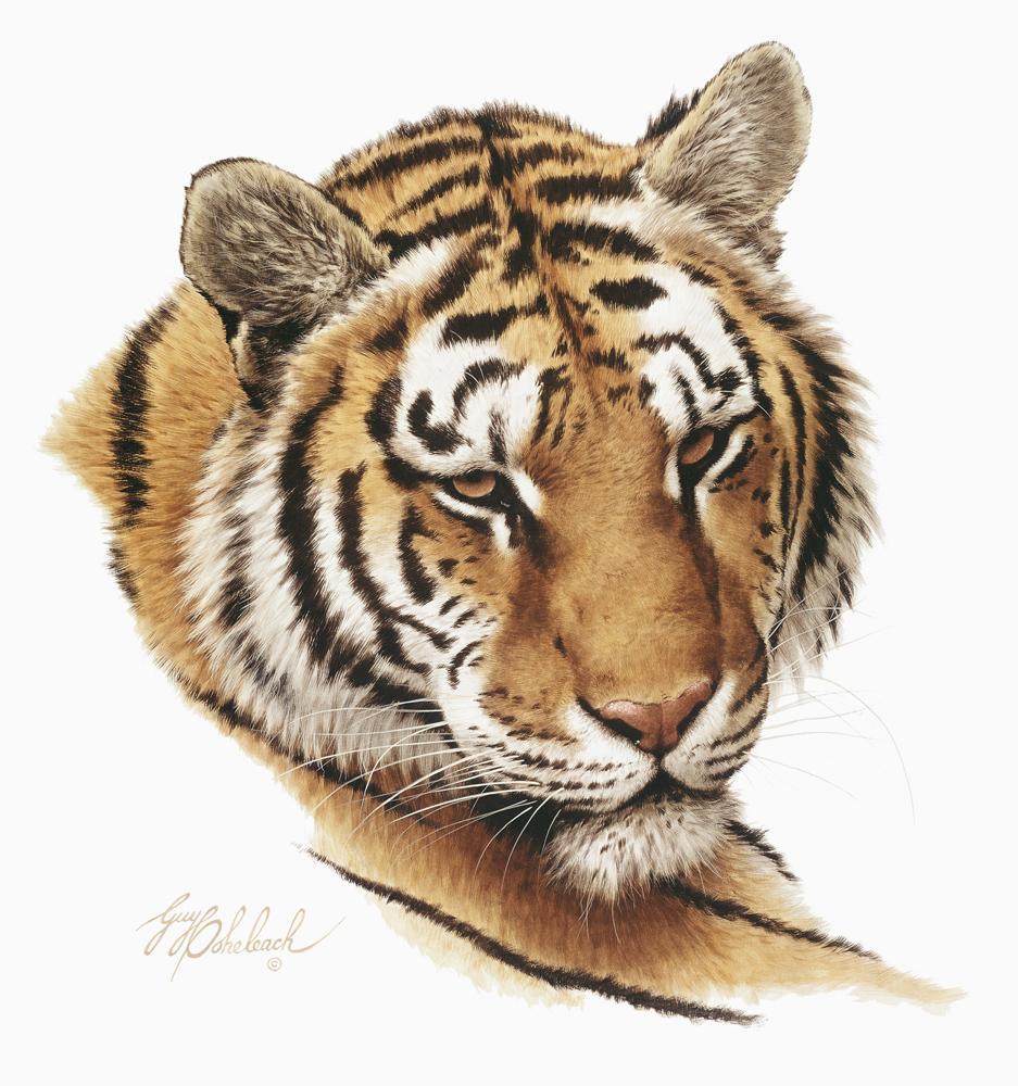 """""""Tiger Head""""  -  16""""x20"""" """"Tiger Head"""" - Portraits  Big Cat Heads  Cat Head Paintings"""