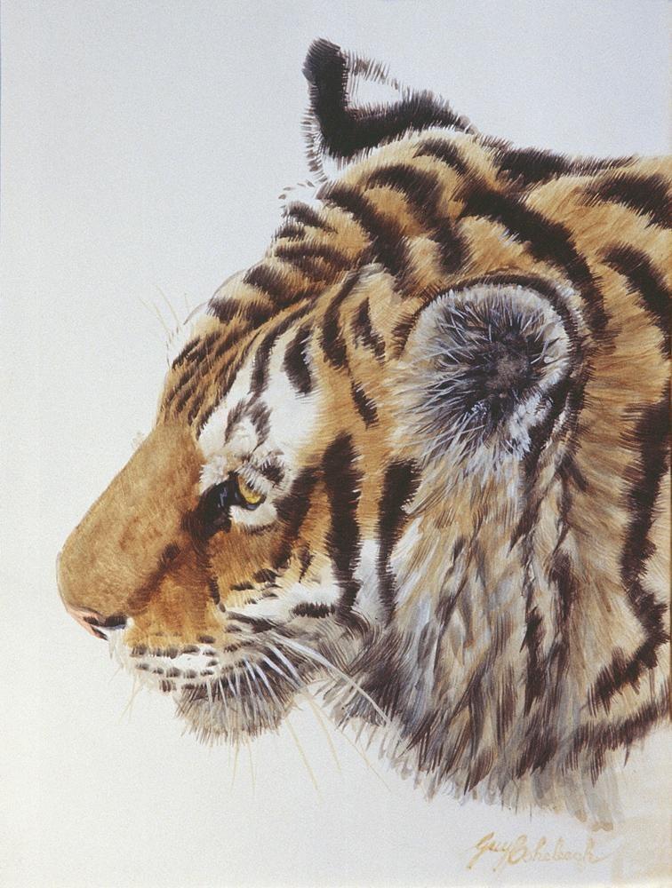 """Tiger Head Sketch"" - Guache sketch  -  9"" x 12"" ""Tiger Head"" - Portraits  Big Cat Heads  Cat Head Paintings"
