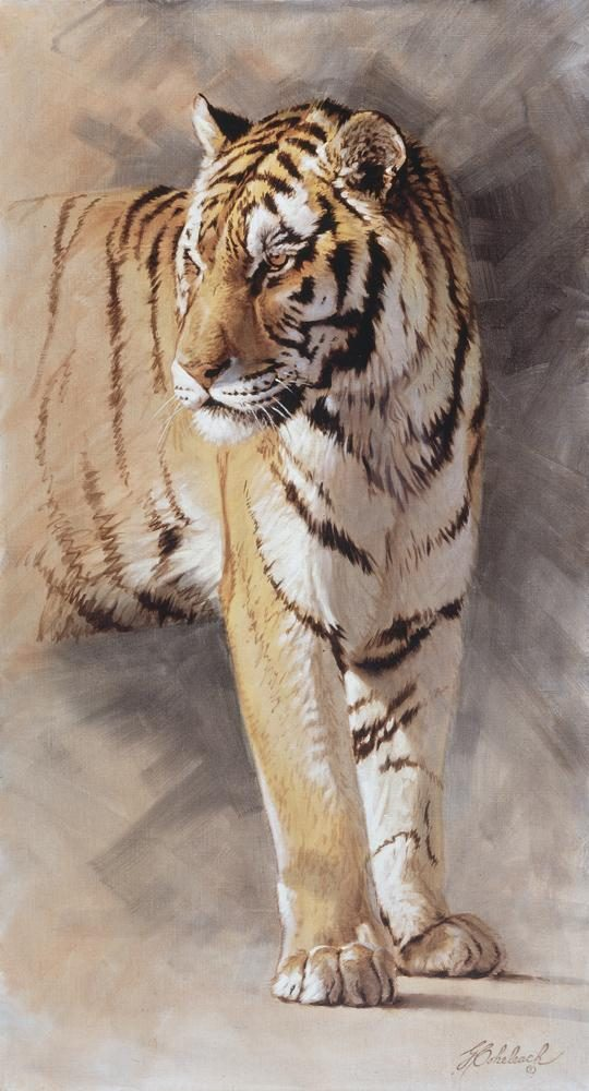 """Tiger Study""  -  44"" x 24"" ""Tiger Study"" - Tigers  Bengal Tiger  Siberian Tiger"