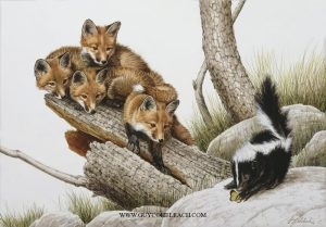 """Up A Stump""  -  22"" x 30"" ""Up A Stump"" - Canine  Wild Canine Paintings  Wolf and Fox Artwork"