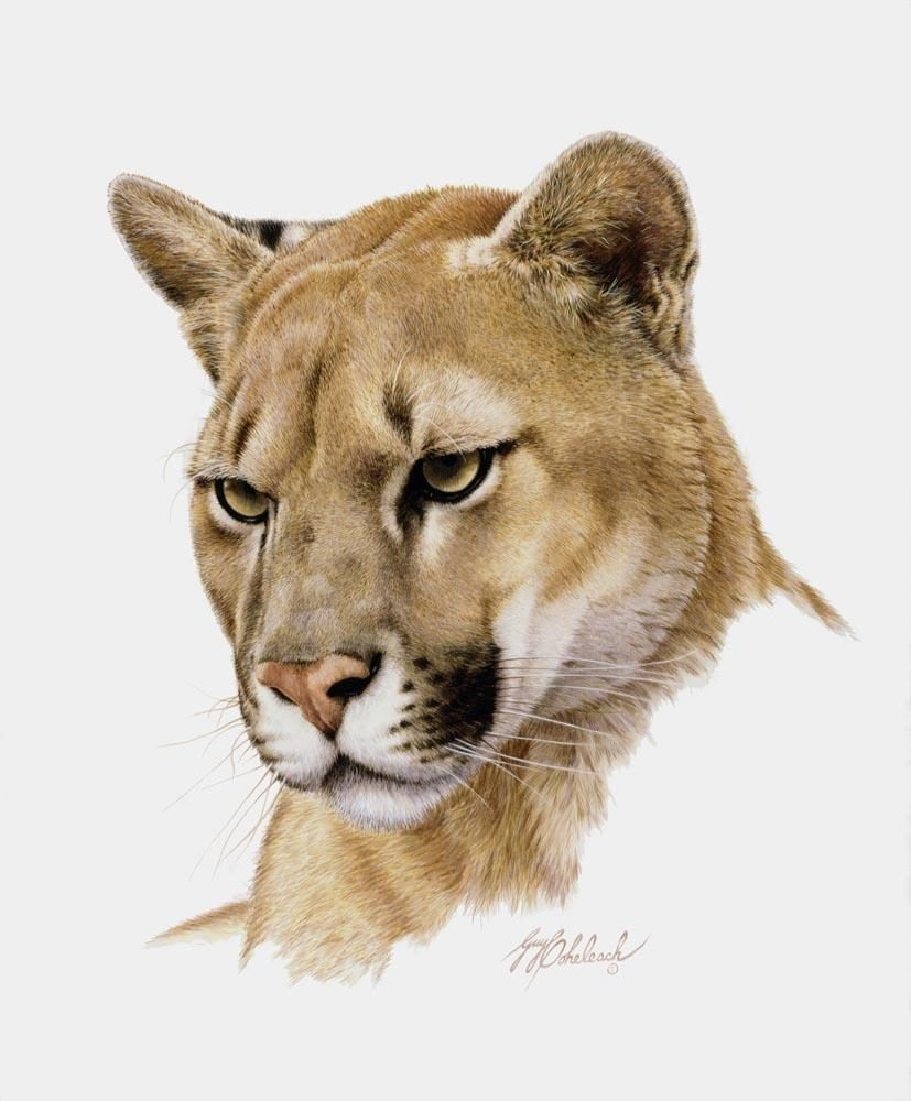 """Western Puma Head""  -  16""x20"" ""Western Puma Head"" - Portraits  Big Cat Heads  Cat Head Paintings"