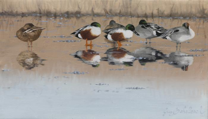 """Wet Ice""   -  8"" x 14"" ""Wet Ice""  - Water Birds  Waterfowl Paintings  Waterbird Paintings"