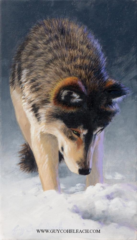 """What Have We Here?""  -  14"" x 8"" ""What Have We Here?"" - Canine  Wild Canine Paintings  Wolf and Fox Artwork"