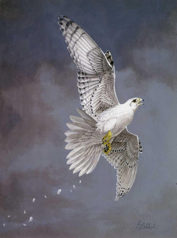 """White Gyrfalcon""  -  40"" x 30"" ""White Gyrfalcon""  Birds of Prey  Raptors"
