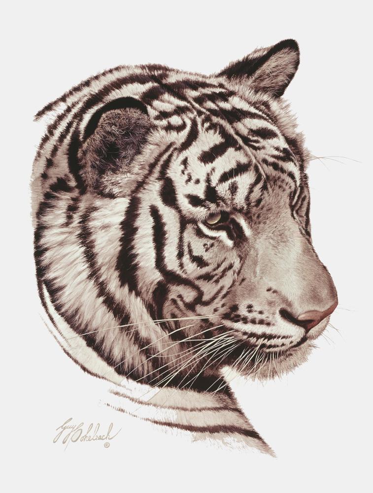 """White Tiger Head""  - 16"" x 20"" ""White Tiger Head"" - Portraits  Big Cat Heads  Cat Head Paintings"